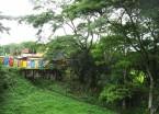 Costa Rica: The Jungle Fights Back