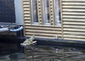 alligator_amsterdam