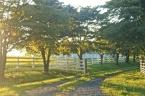 Virginia_Trees